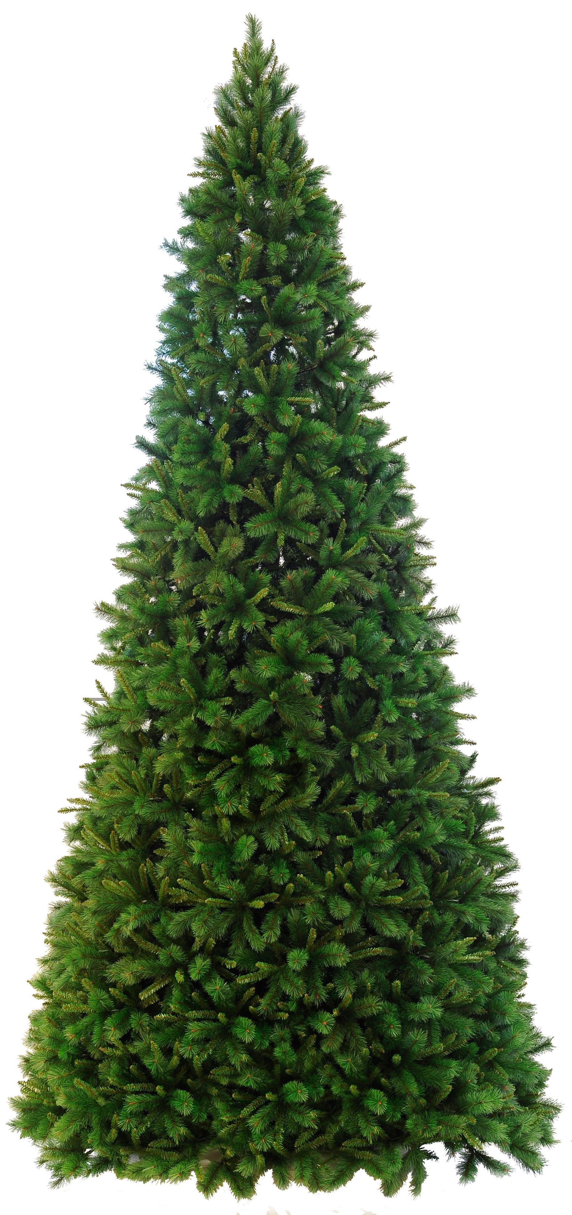 weihnachtsbaum colorado ca 500 cm auch f r au en. Black Bedroom Furniture Sets. Home Design Ideas